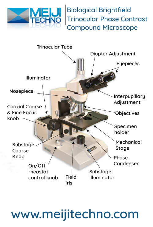 Biological Brightfield Phase Contrast Compound Microscope Terminology