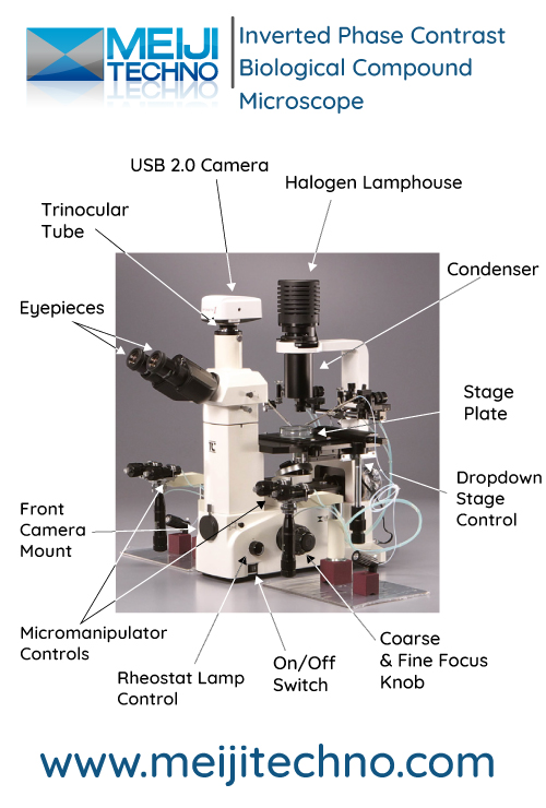Inverted Phase Contrast Biological Compound Microscope Terminology