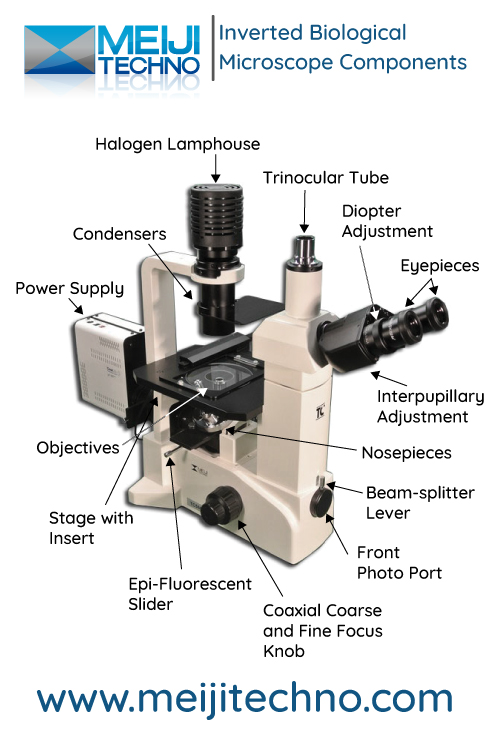 Inverted Biological Microscope Terminology